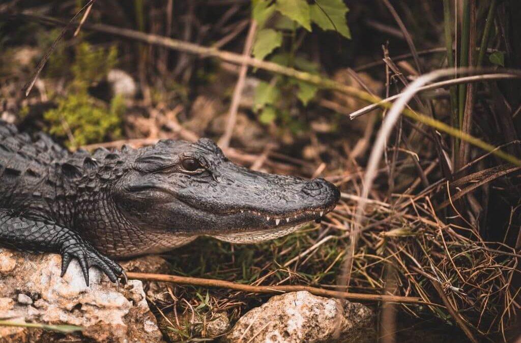 Comment visiter les Everglades ?