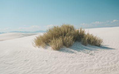 Découvrir White Sands et ses dunes de sable blanc