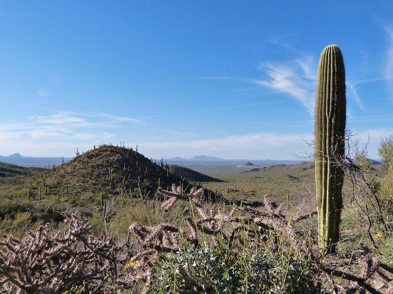 Vue Saguaro